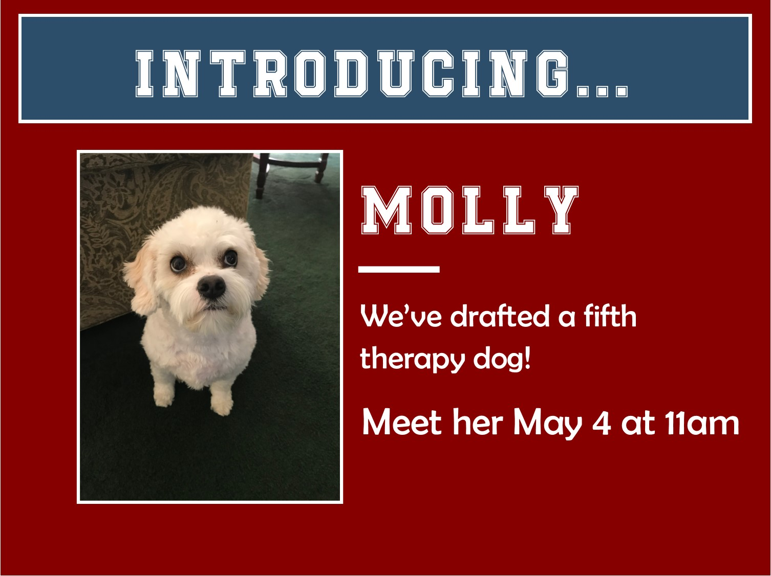 Molly therapy dog