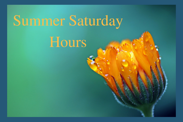 "Yellow Flower Opening with ""Summer Saturday Hours"" next to it"